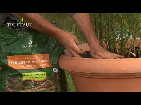 Le Bambou En Pot Plantes Maison Jardin
