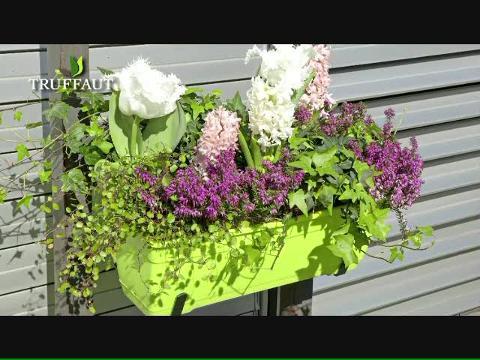composition florale retombante interesting plantes vertes d intrieur retombantes with. Black Bedroom Furniture Sets. Home Design Ideas