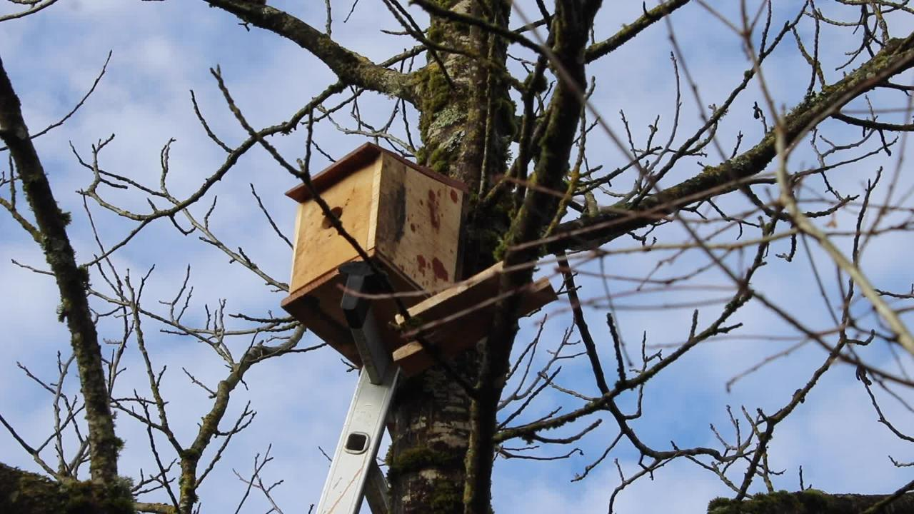 Comment installer un nichoir à oiseaux dans un arbre ? - Bricolage ... - Nichoir Mésange Orientation
